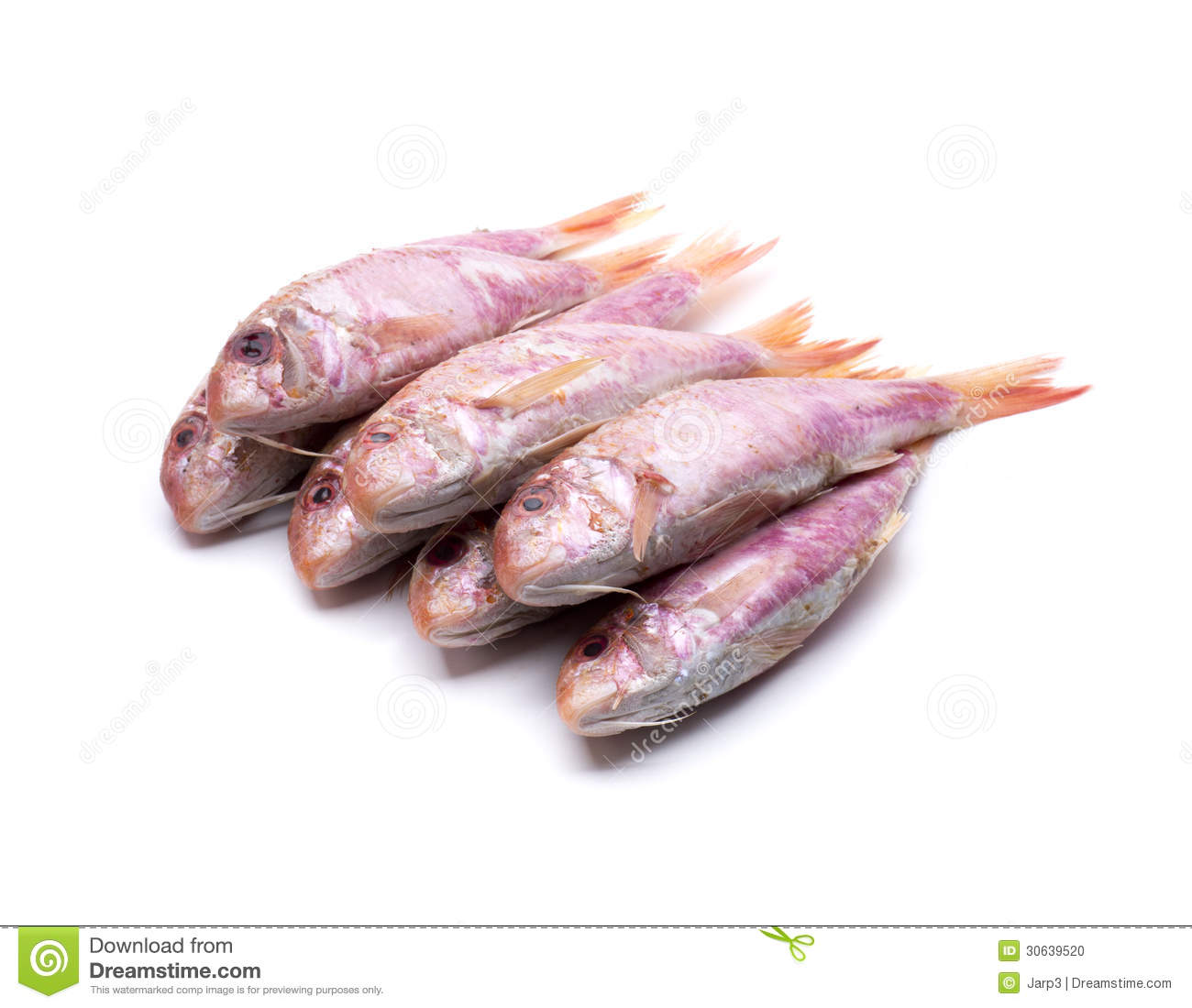 Several mullet stock photo image 30639520 for Eating mullet fish