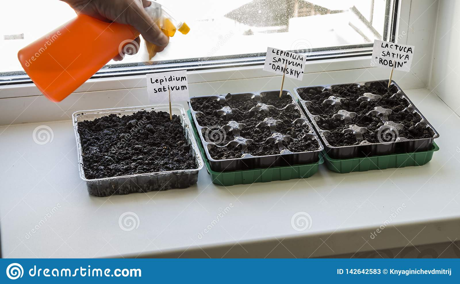 Several plastic containers with garden soil. Planted seedlings-Image
