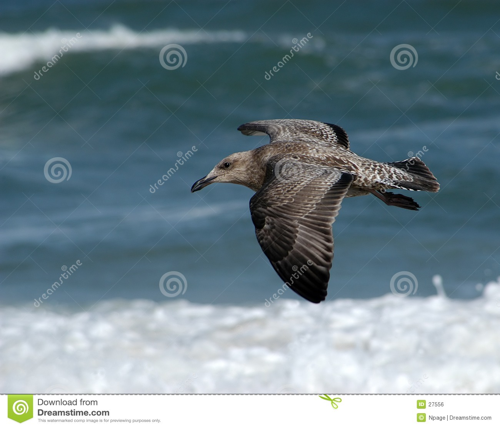 Sevogel