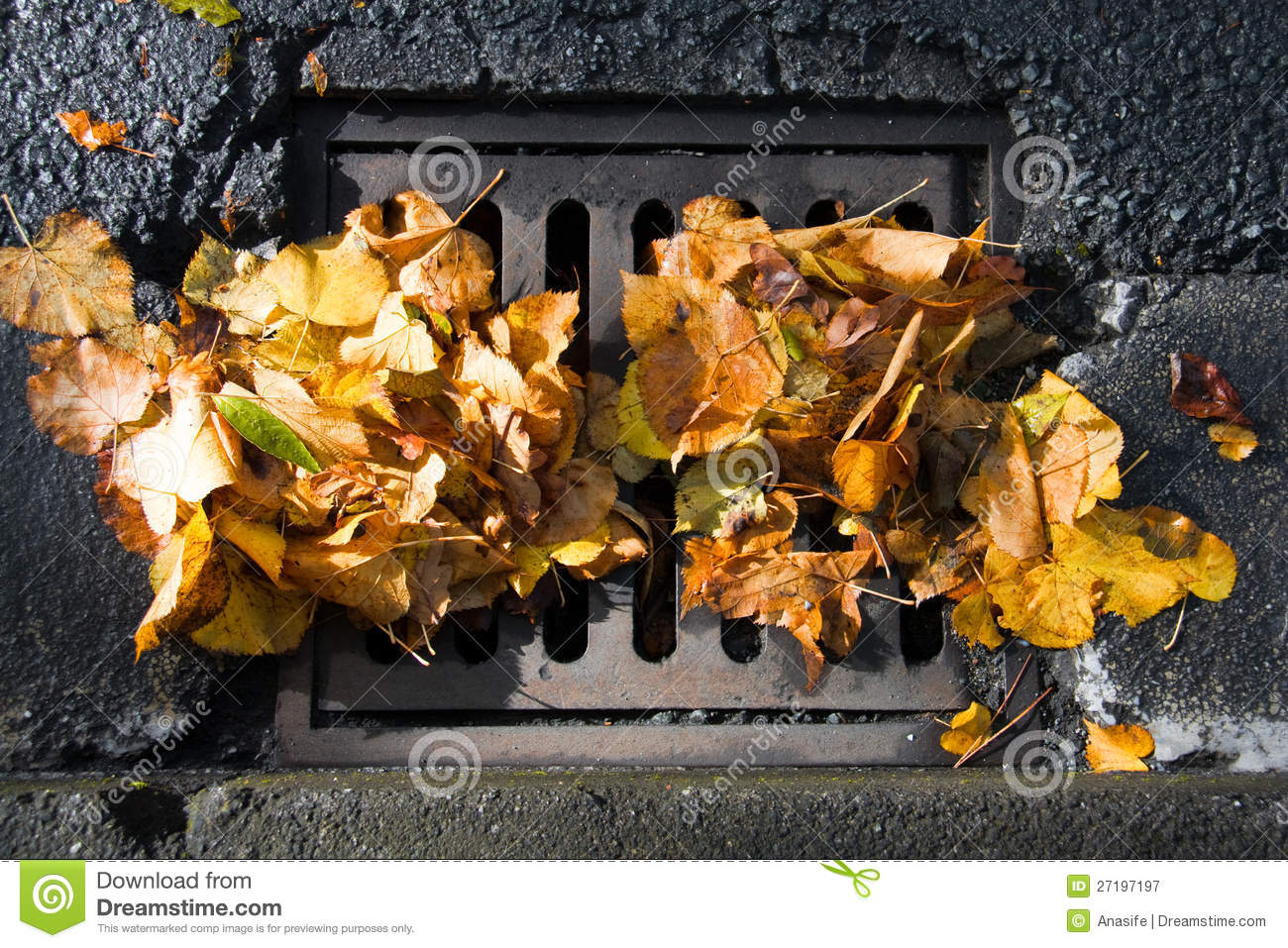 Sewer clogged with fallen leaves