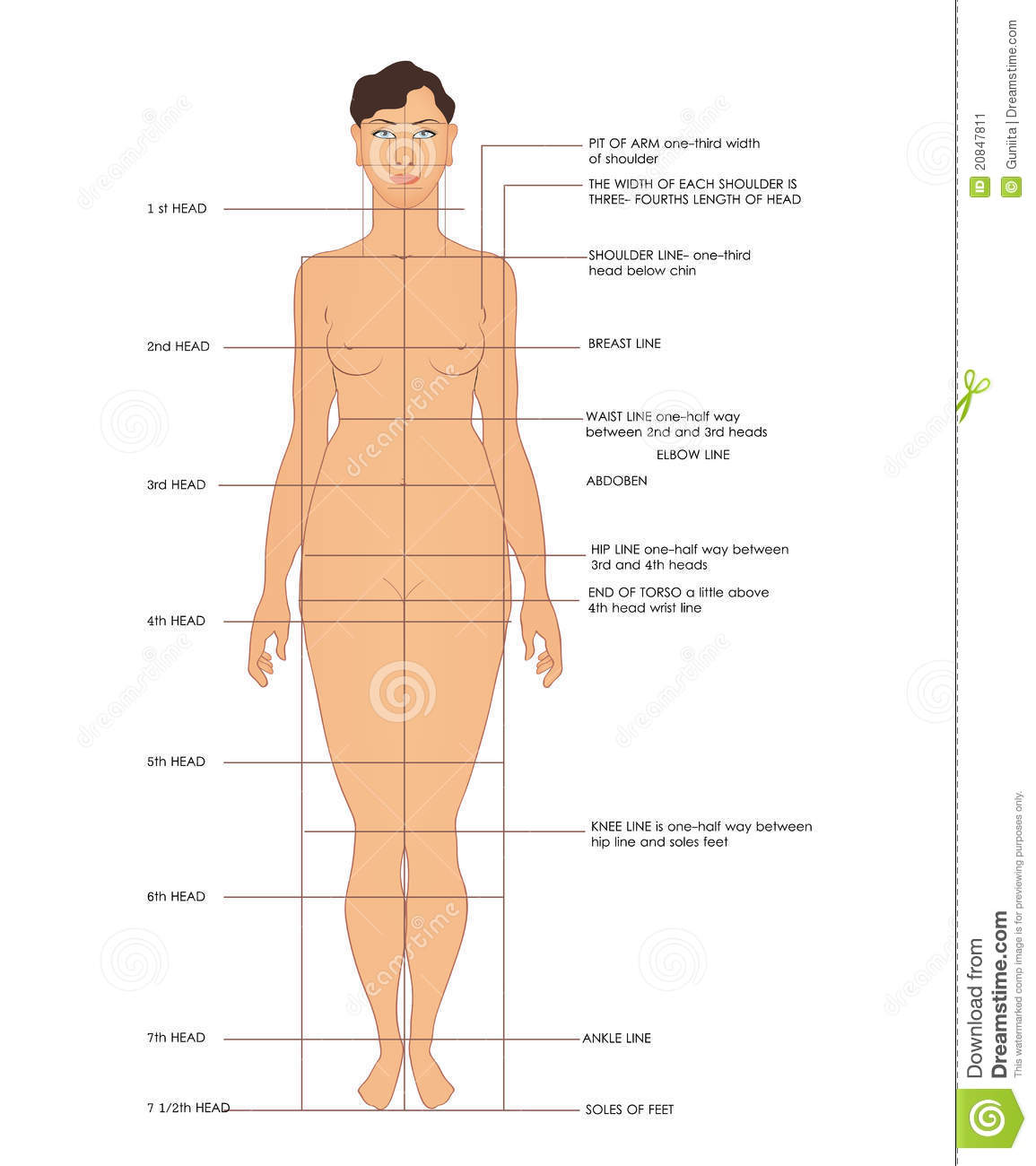 sewing measurements stock vector  illustration of knee