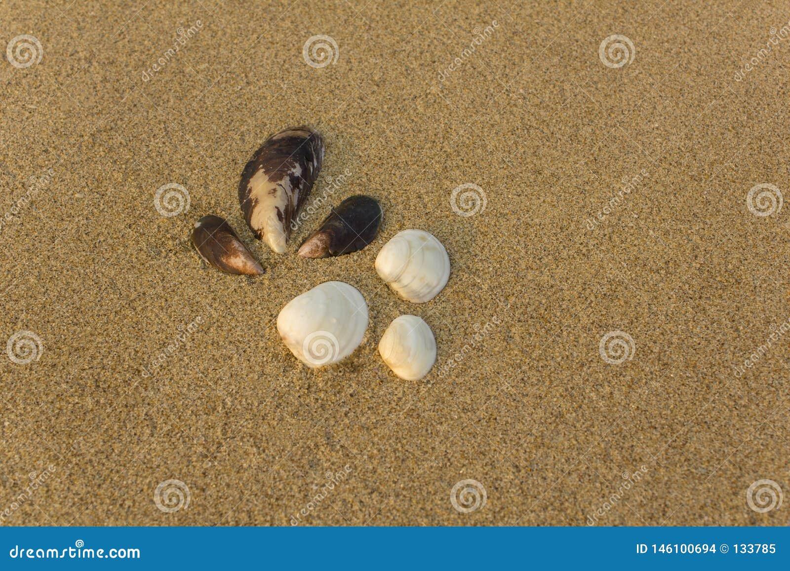 Sex stora vita och bruna skal stänger sig upp på en suddig gul sand