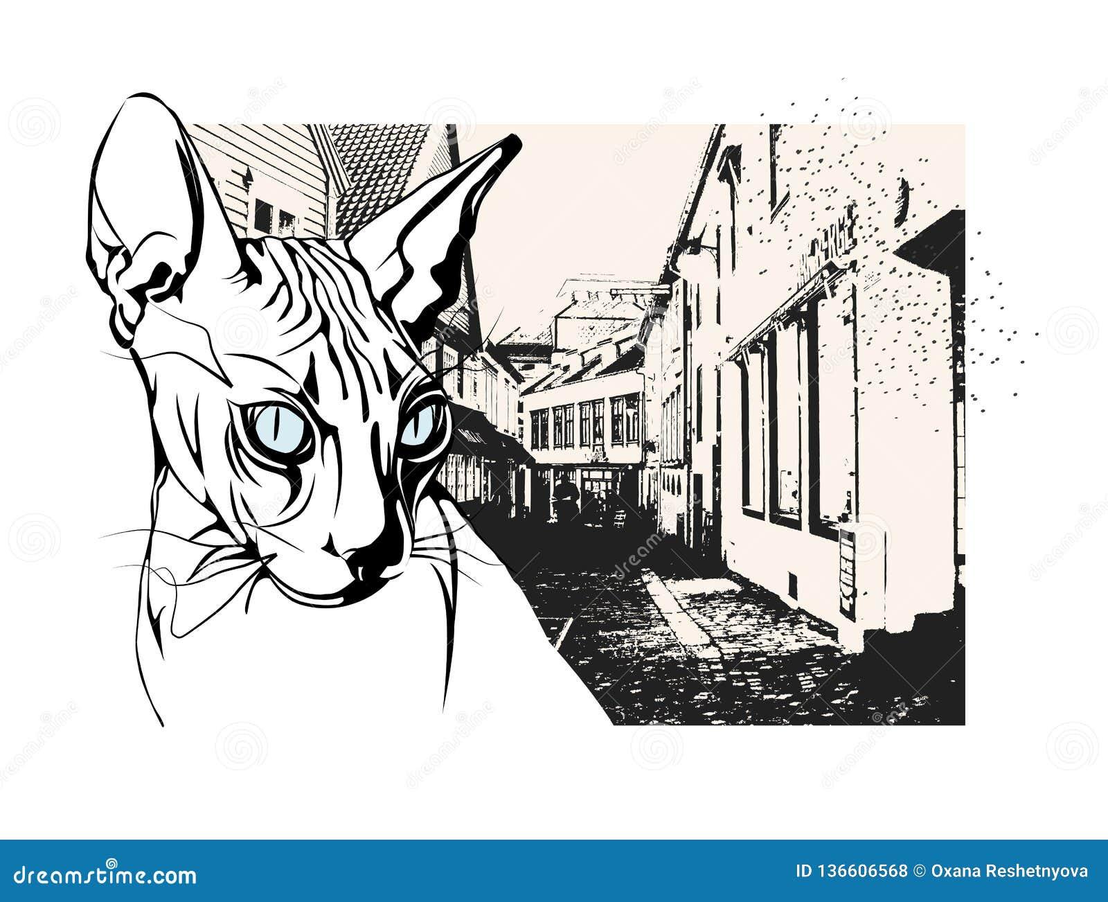 Sfinksa kot w starym Europejskim mieście