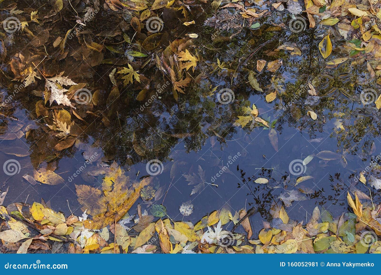 Sfondo d autunno delle foglie cadute in una pozza e in una riflessione