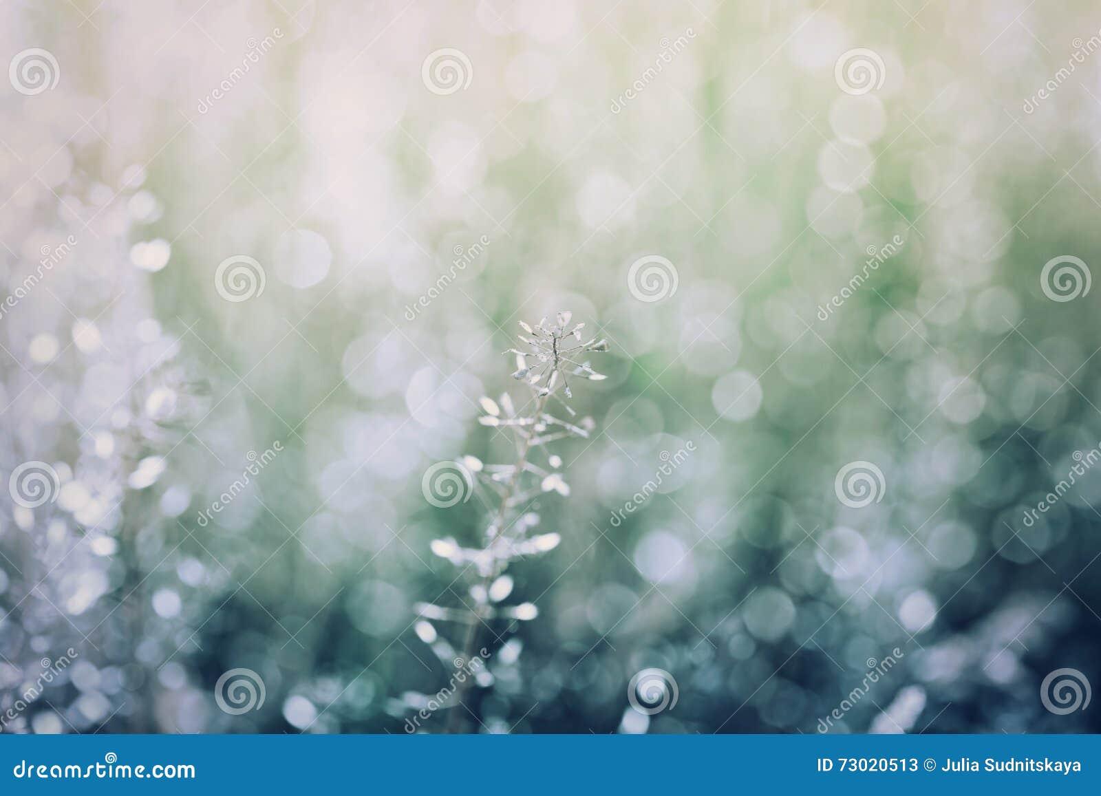 Sfondo naturale astratto con bokeh, colore blu e verde d annata, struttura della natura, prato di estate, penombra