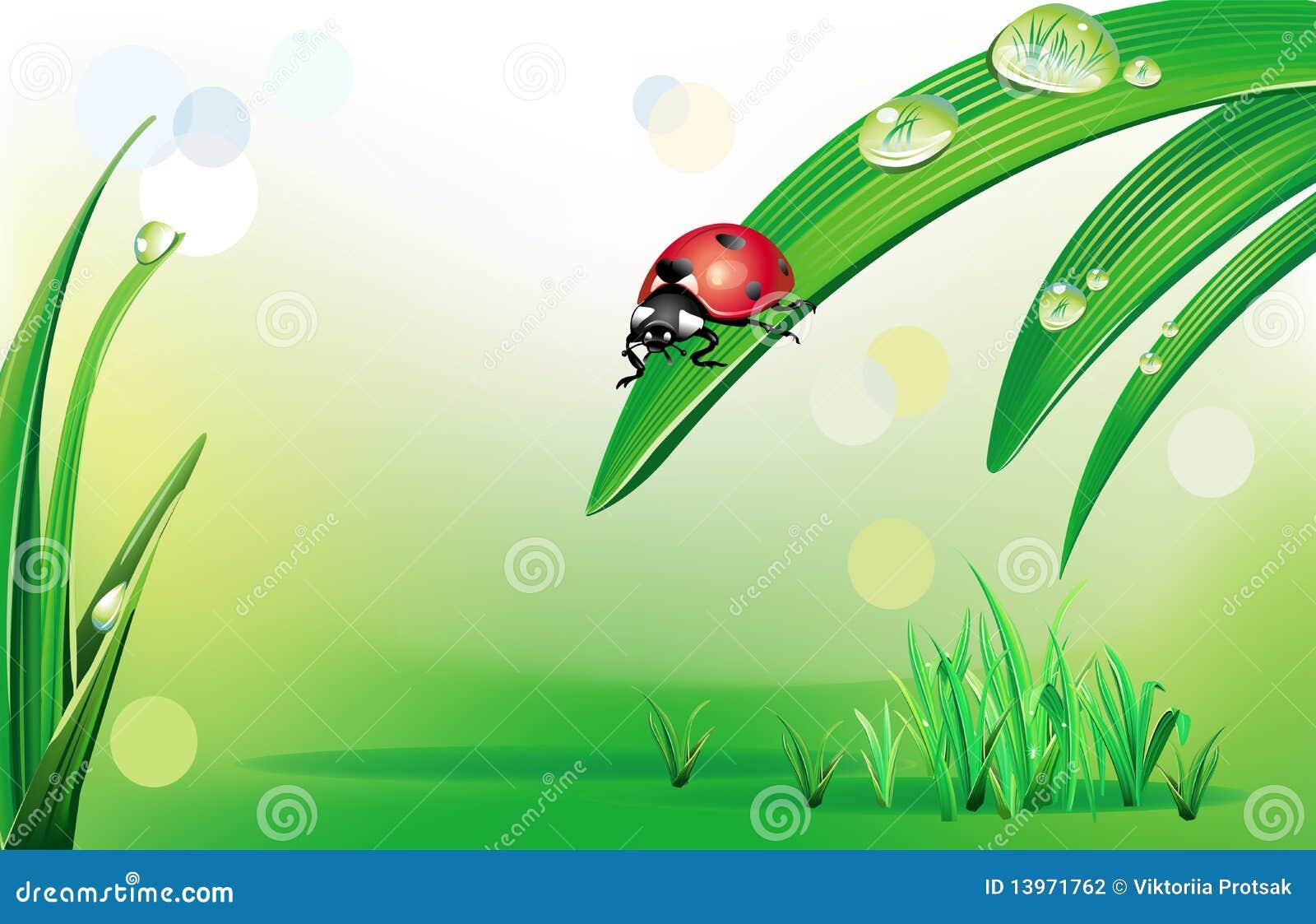 Sfondo naturale con la coccinella illustrazione vettoriale - Coccinella foto gratis ...