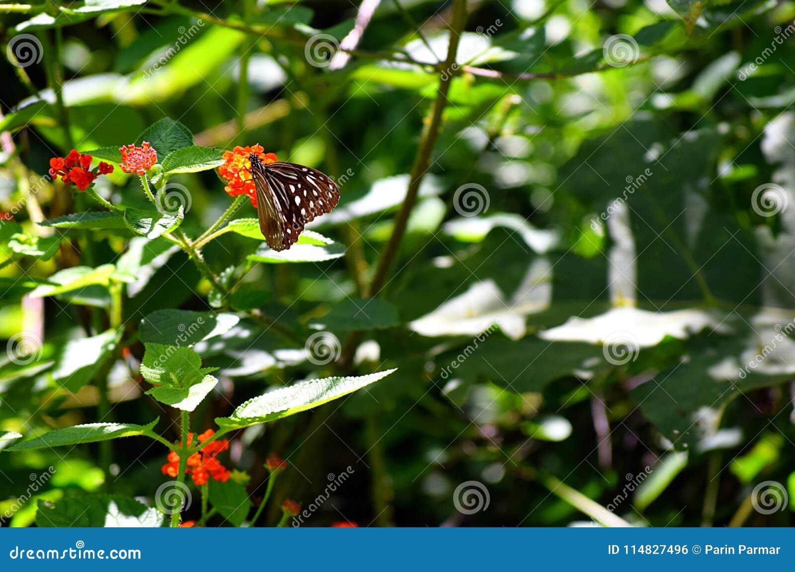 Sfondo naturale con pianta, i fiori e una farfalla di Brown scuro con il modello bianco