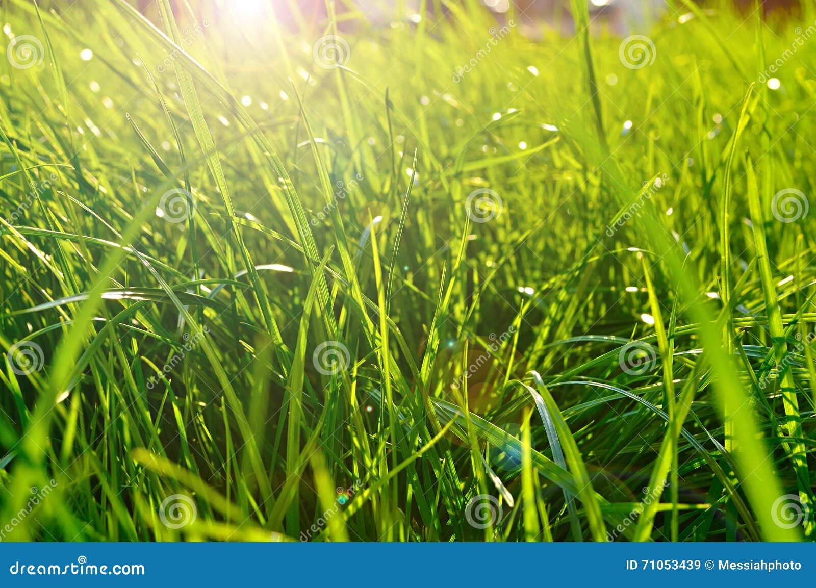 Sfondo Naturale Della Primavera Primo Piano Di Erba Verde Fresca