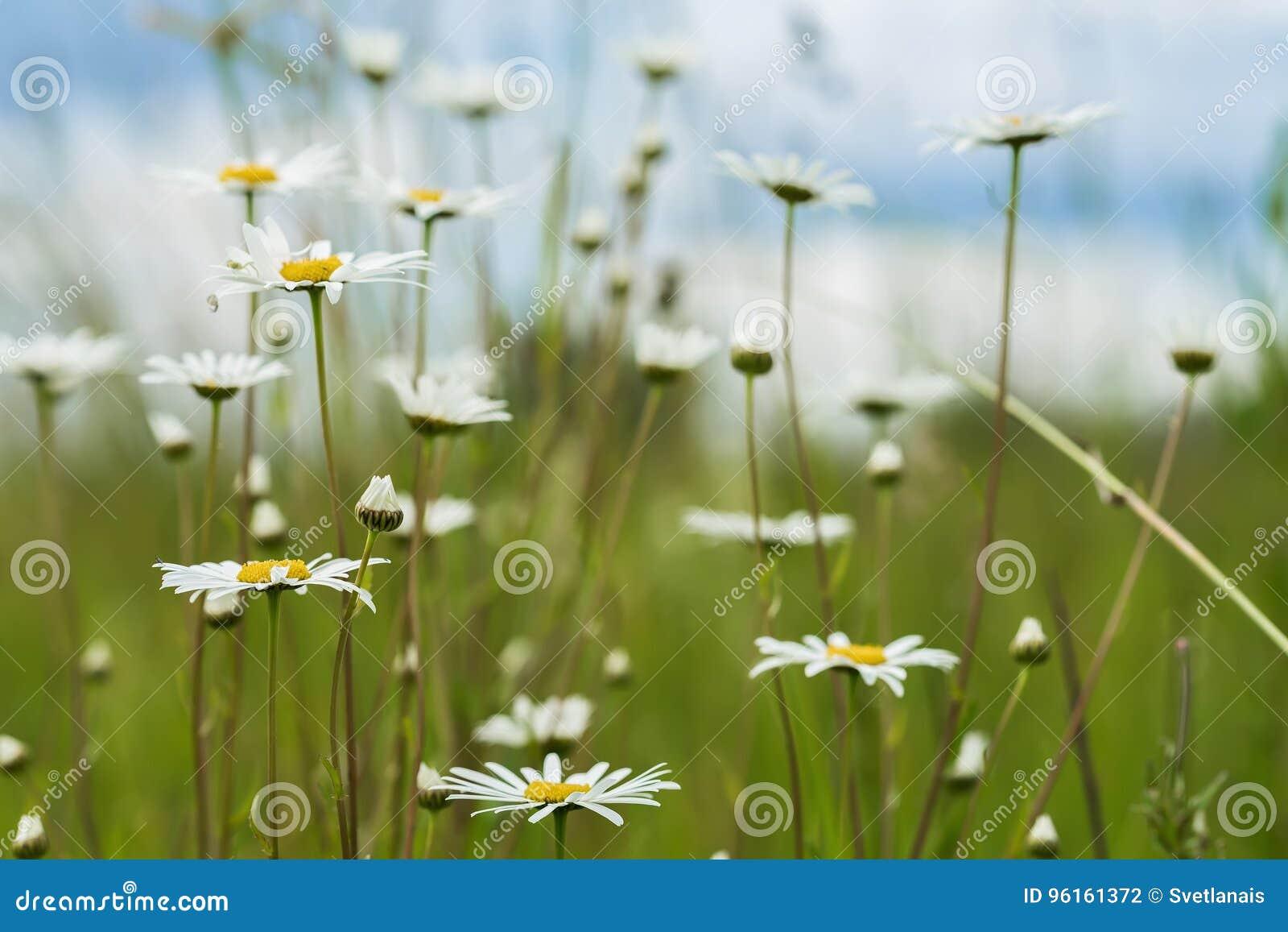 Sfondo Naturale Di Estate Ecologia Concetto Verde Del Pianeta Bei