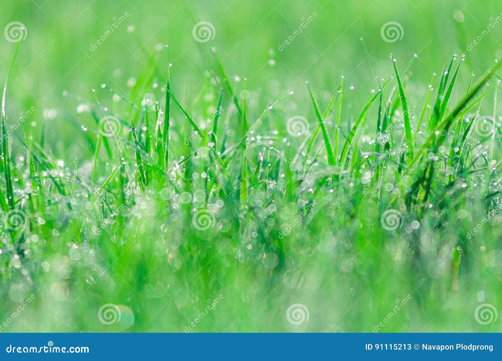 Sfondo Naturale Verde Astratto Erba Fresca Della Molla Con Le Gocce