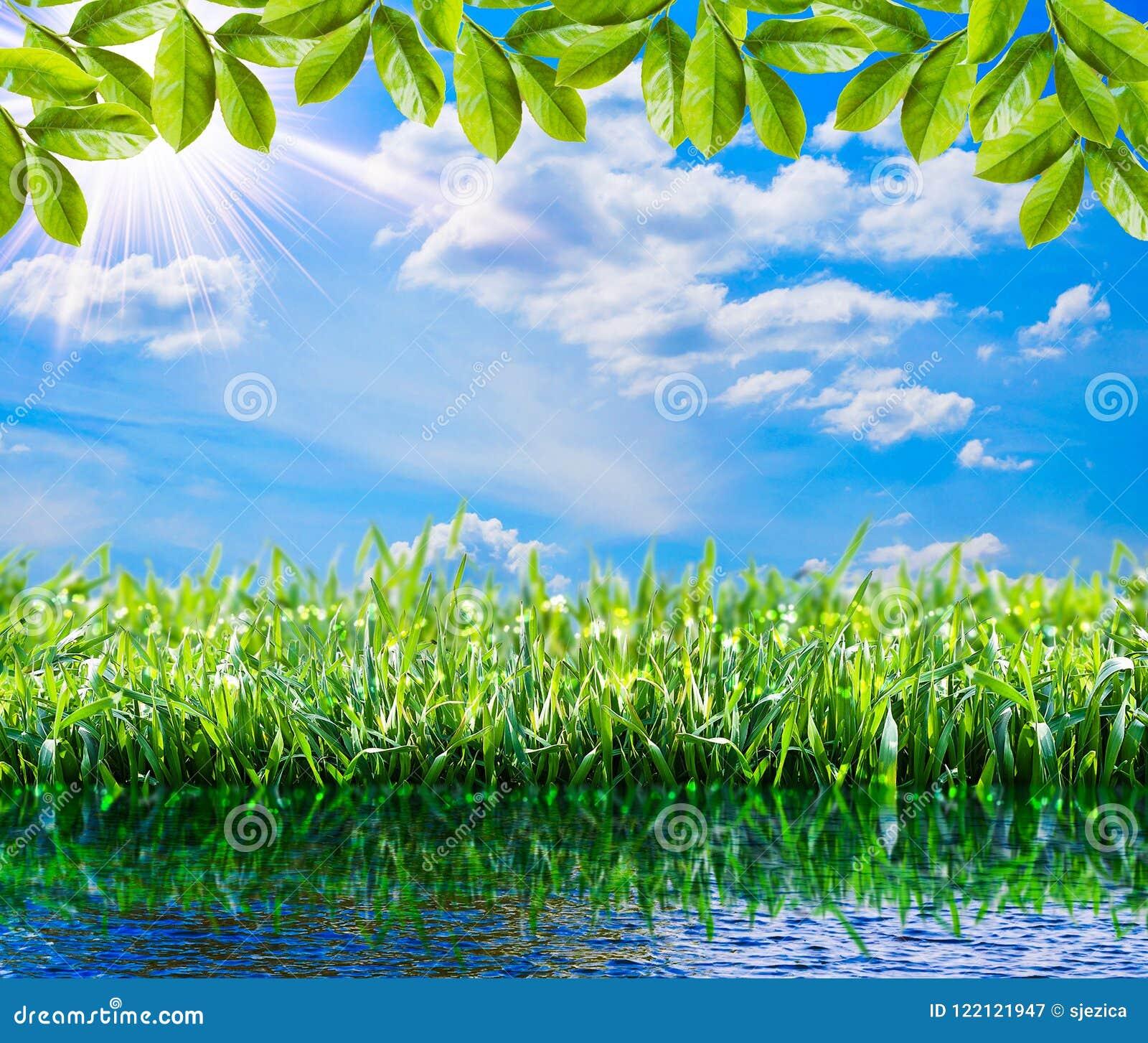 Sfondo Naturale Verde Erba Verde Della Primavera Acqua Sole E