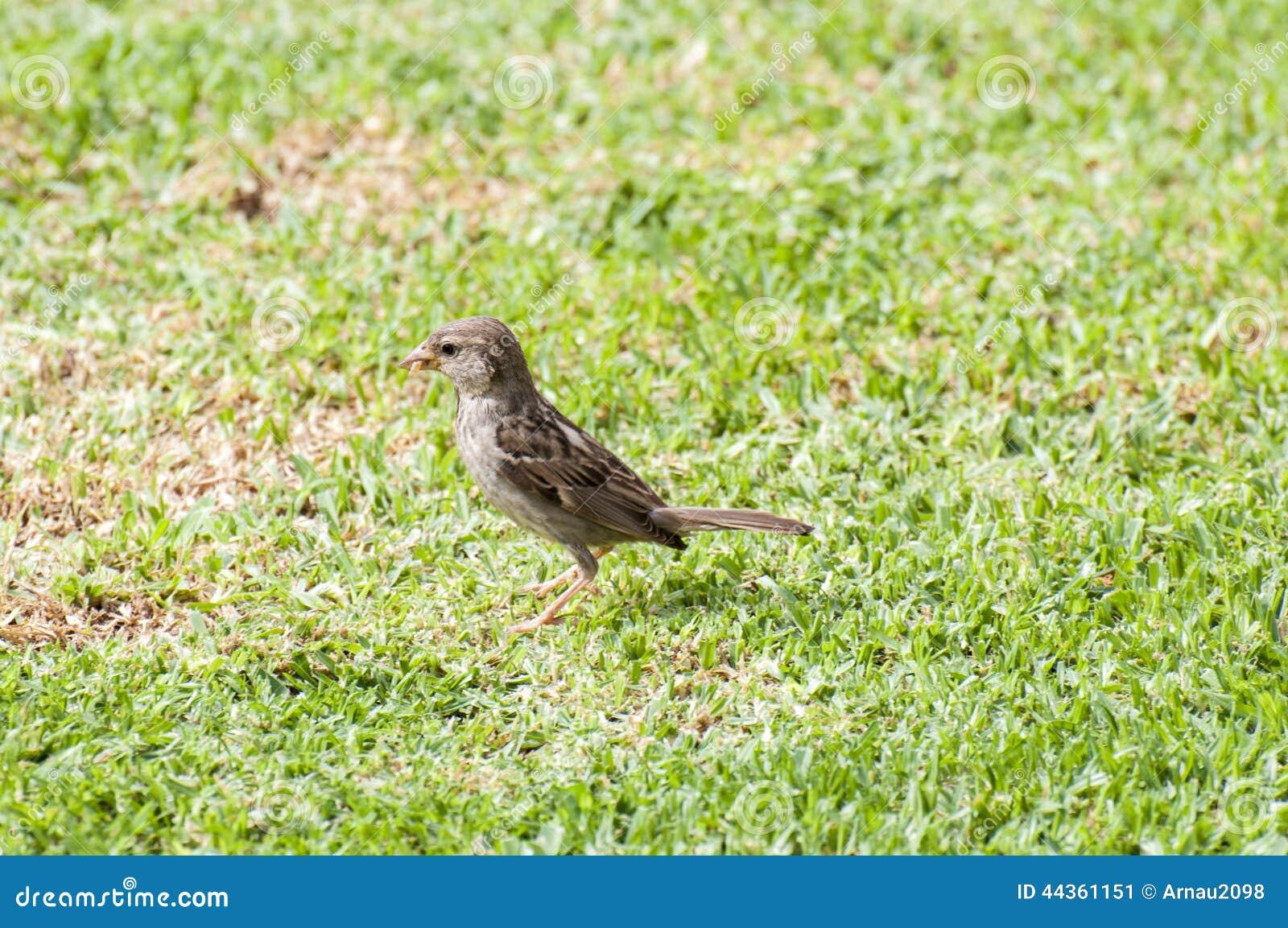 Sguardo del passero