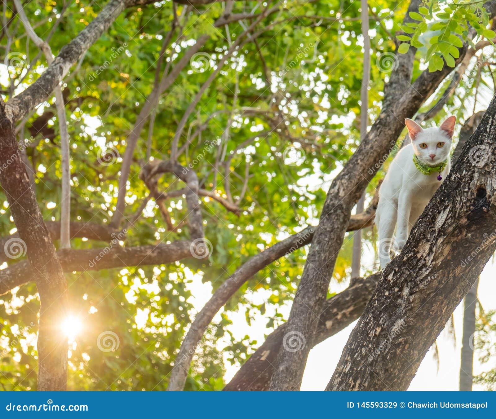 Sguardo fisso bianco impertinente del gatto direttamente in dubbio