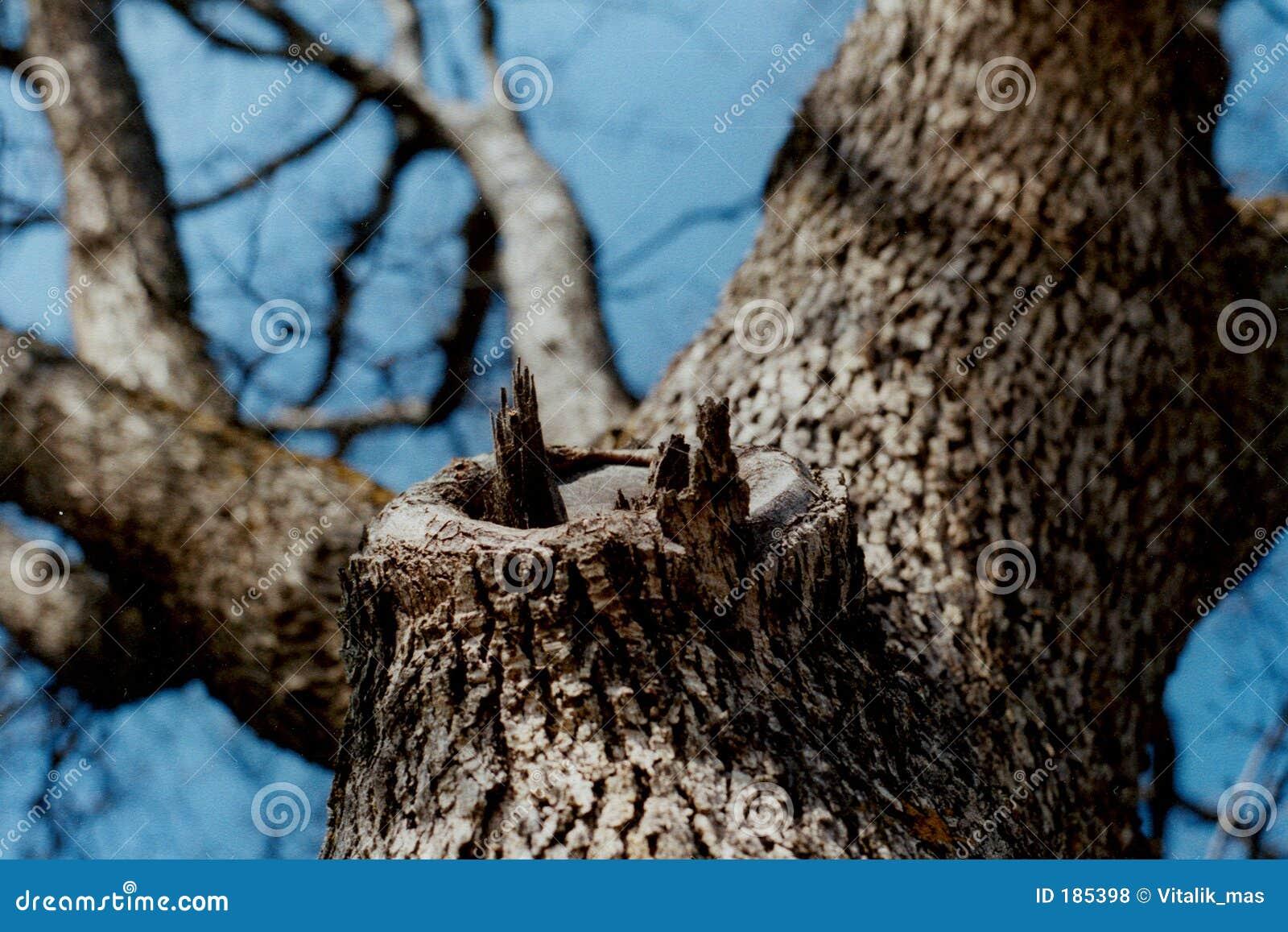 Sguardo in su dell albero 2