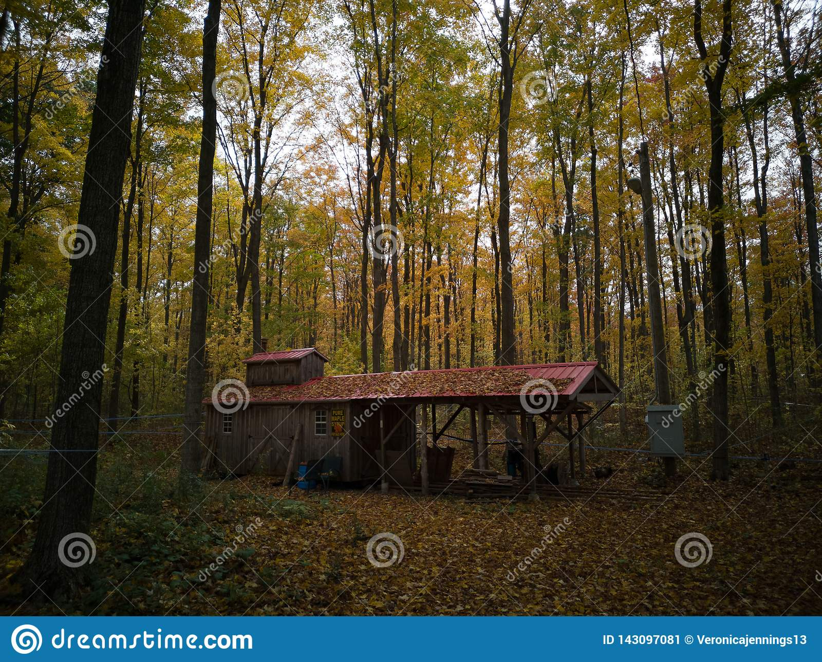 A shack in the middle of the forest