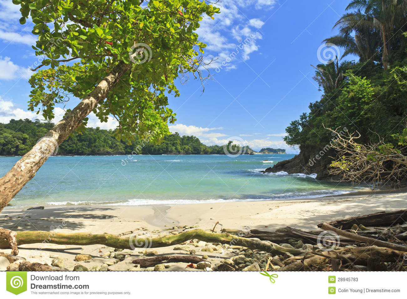 Shade Tree on Playa Manuel Antonio
