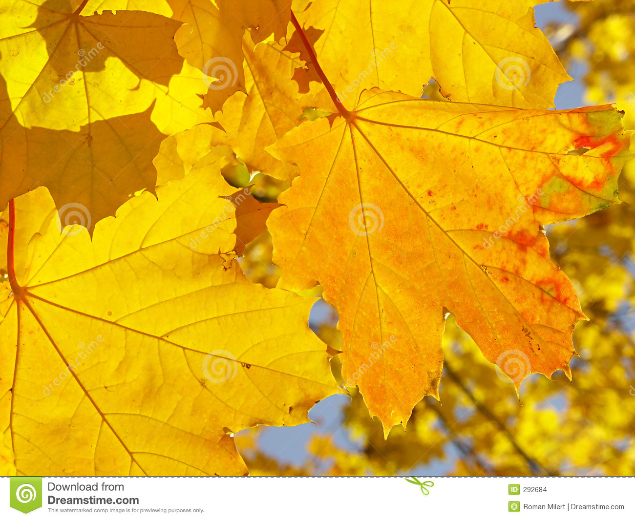 Shades Of Yellow shades of yellow stock images - image: 292684