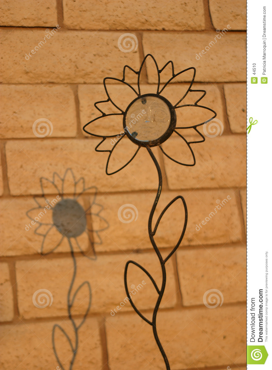 Shadow Upon a Sunflower