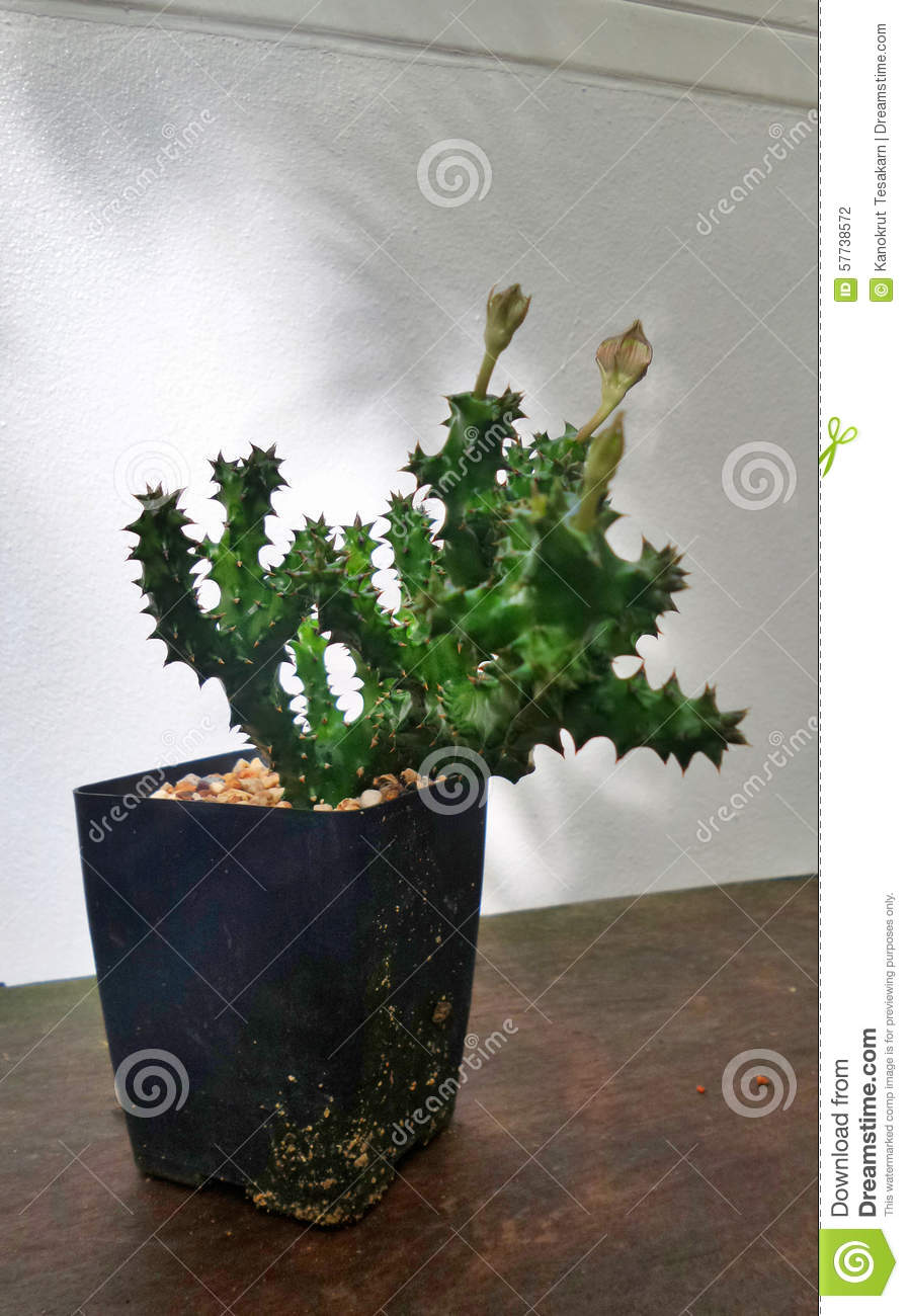 Shadow Of Tree On White Wall And Cactus In Plant Pot On