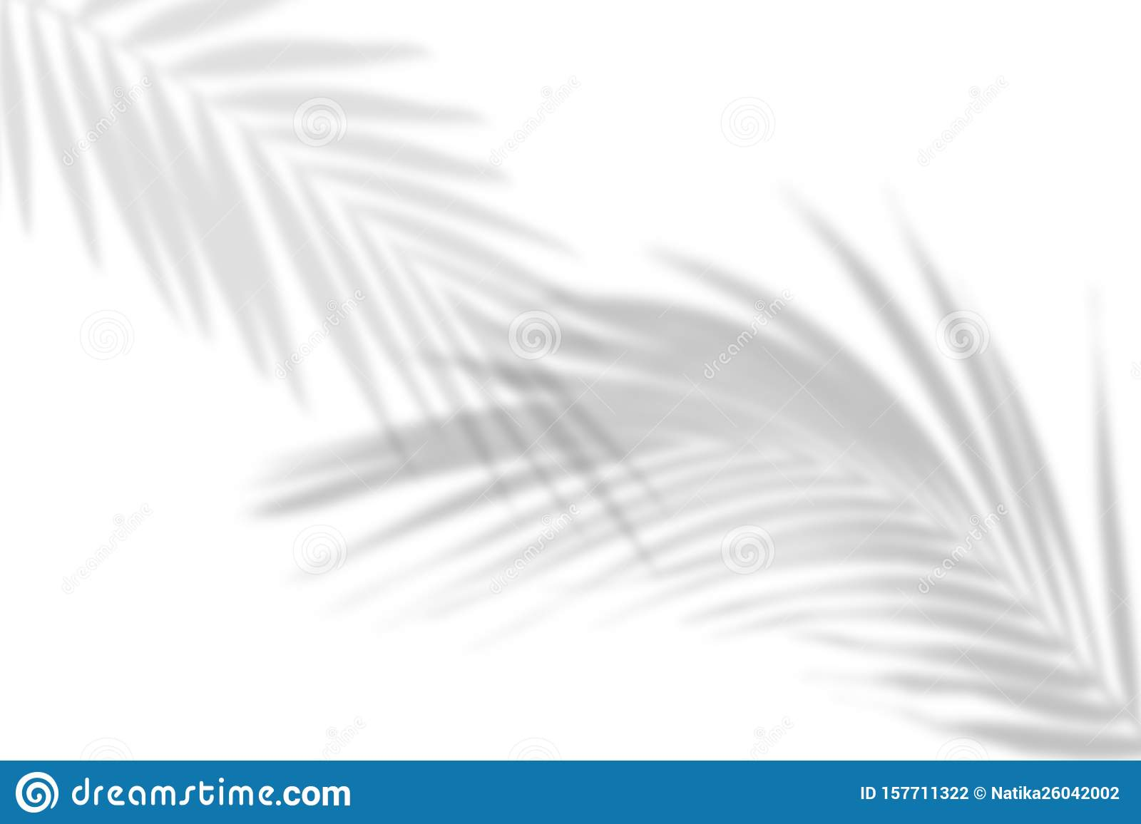 The Shadow Of Tropical Leaves On The White Wall Palm Leaves Black And White Image To Overlay Photos Or Layout Stock Photo Image Of Effect Botany 157711322 30 realistic tropical leaves pack is one of the best realistic tropical leaves overlays. https www dreamstime com shadow tropical leaves white wall palm black image to overlay photos layout art artistic backdrop background image157711322