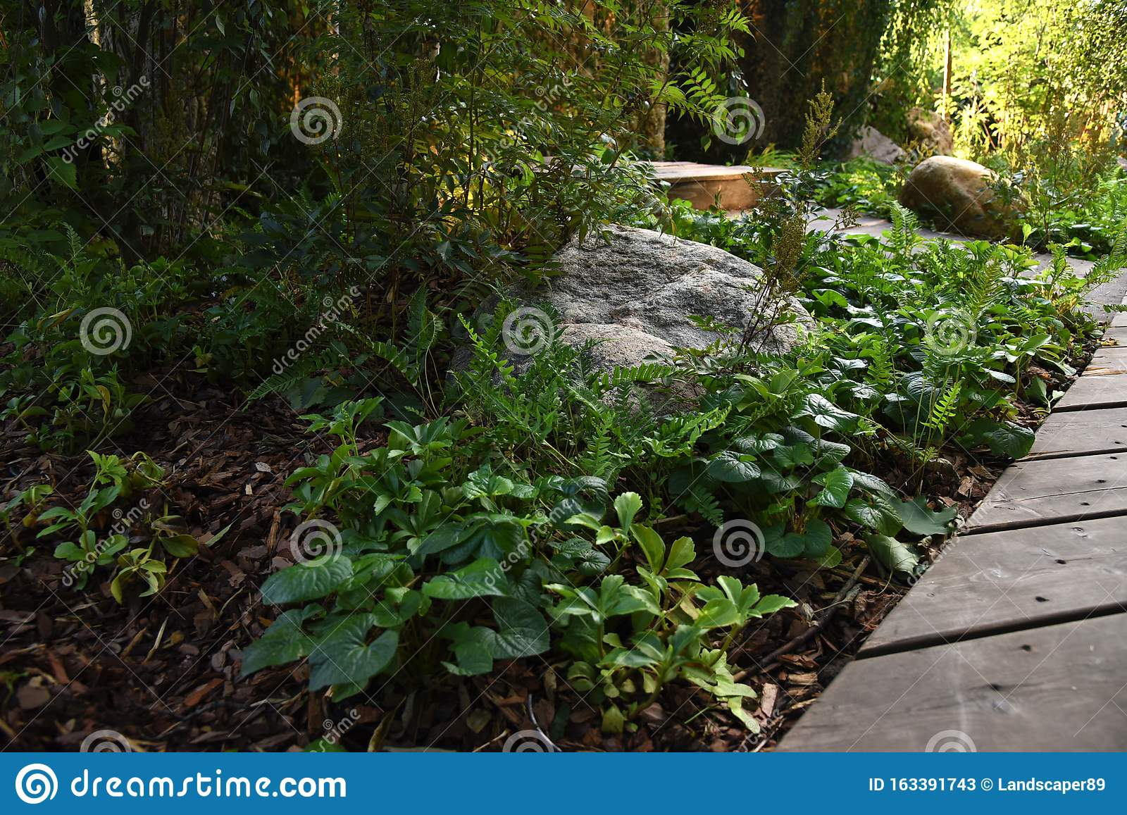 Shady Garden Plants And Decking Path Stock Image Image Of Shady