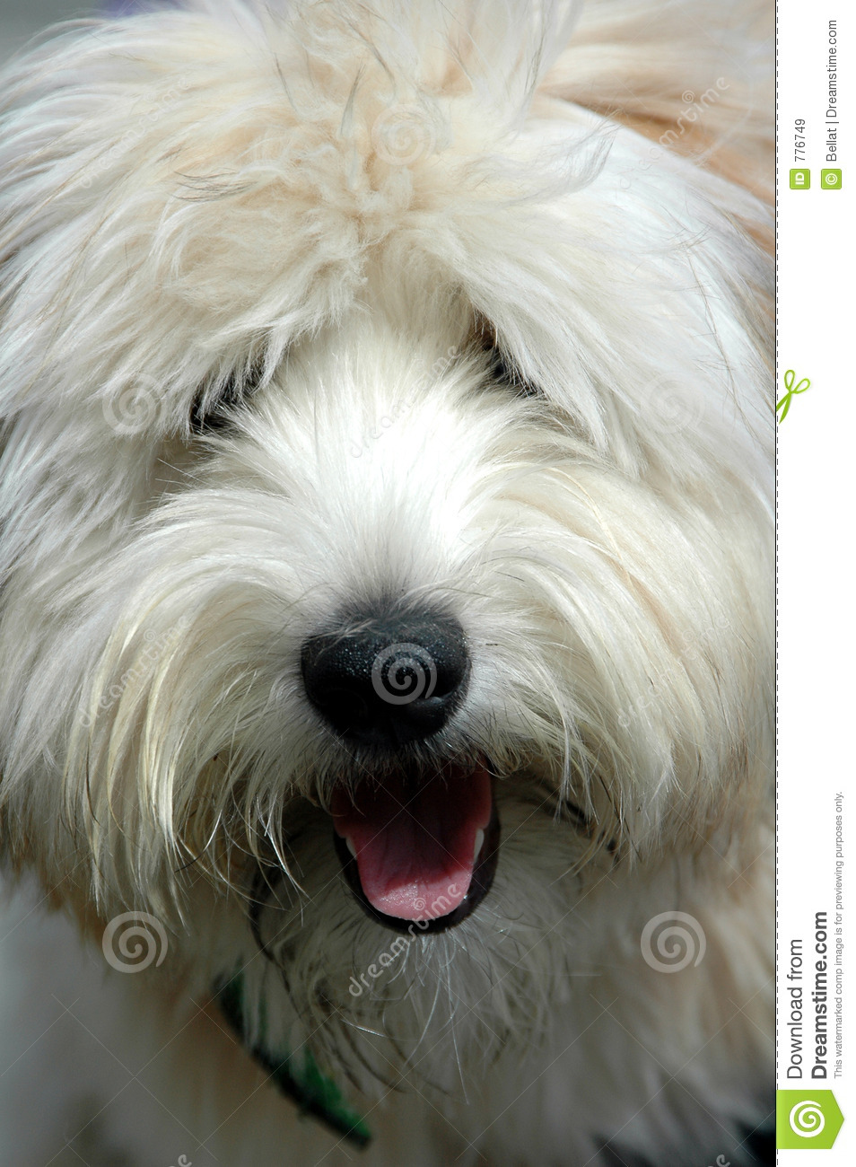 Funny Hairy Dog Pictures
