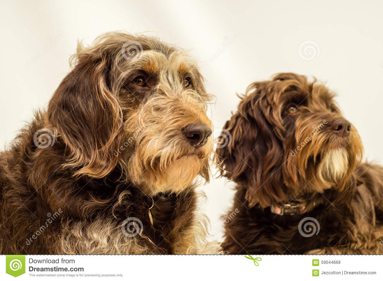 Mixed breed dogs against a white background.