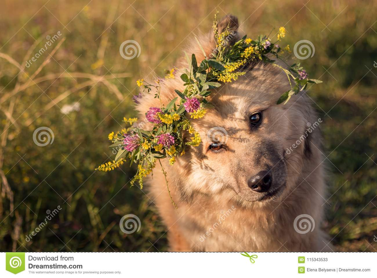 Shaggy sand-colored dog bent his head and looks interested at the photographer