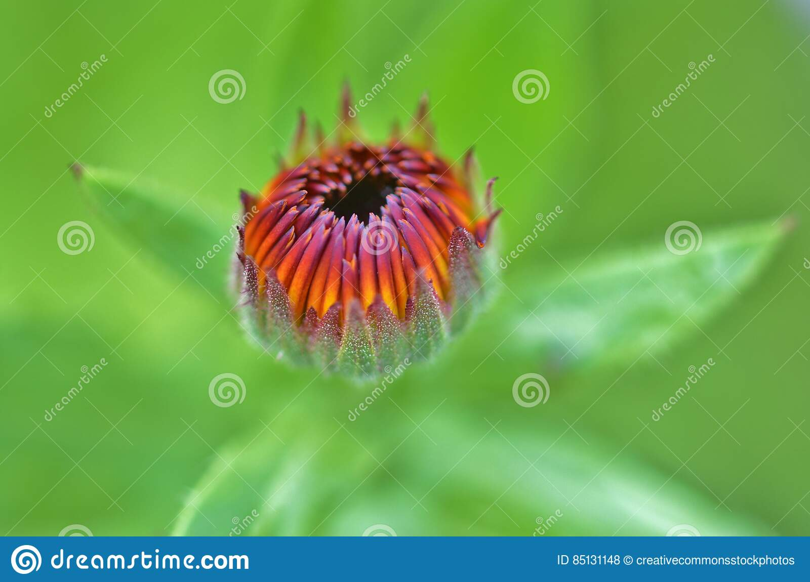 Shallow Photo of Yellow and Purple Flower