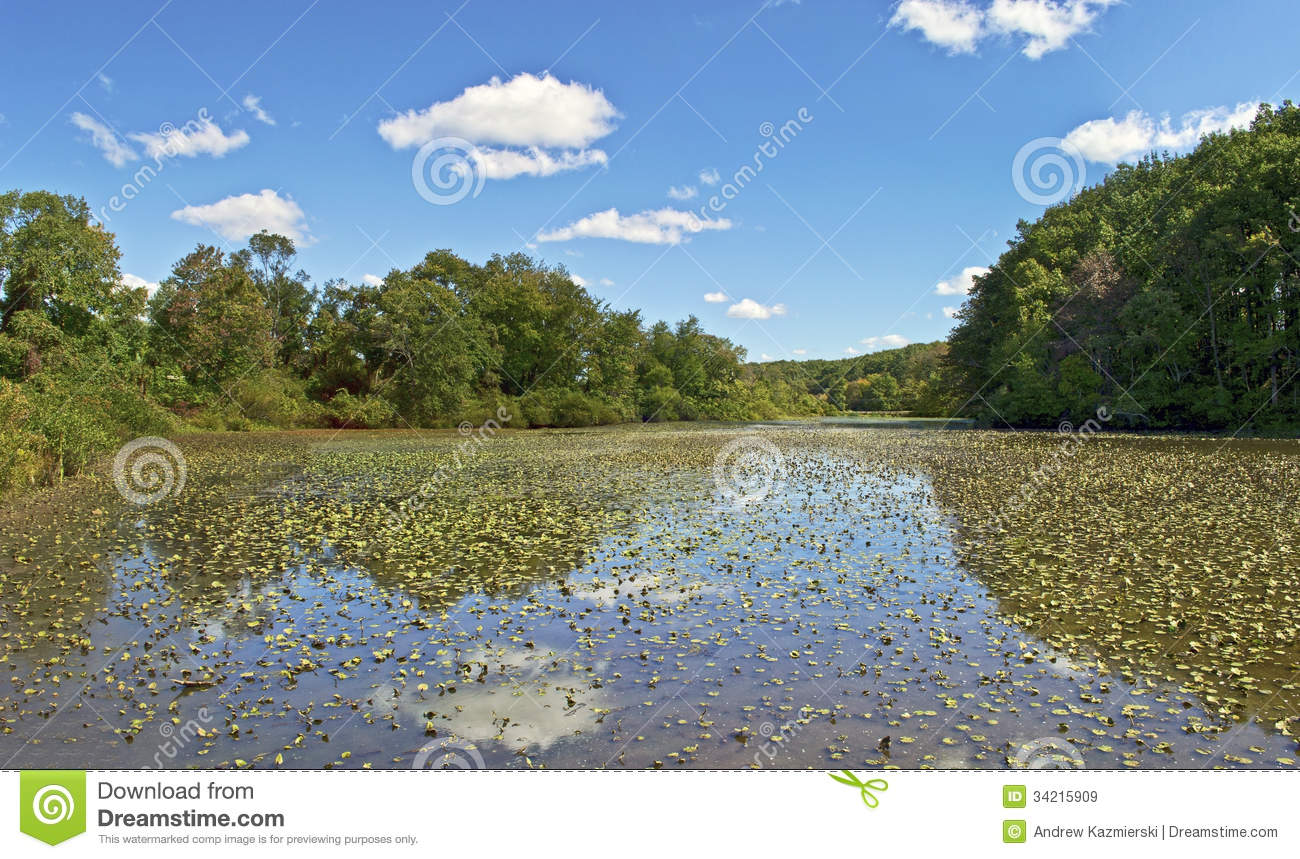 Shallow pond panorama royalty free stock images image for Shallow garden pond