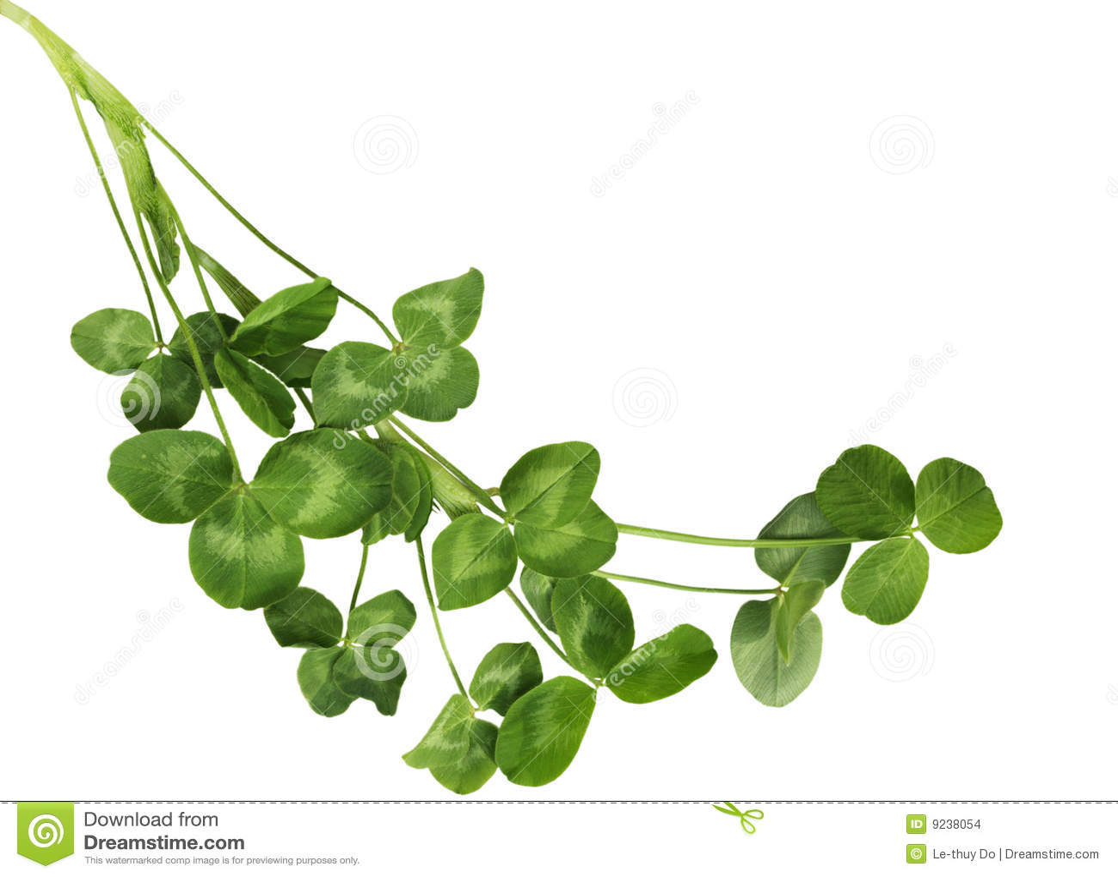 Shamrock plants stock images image 9238054 - Shamrock houseplant ...