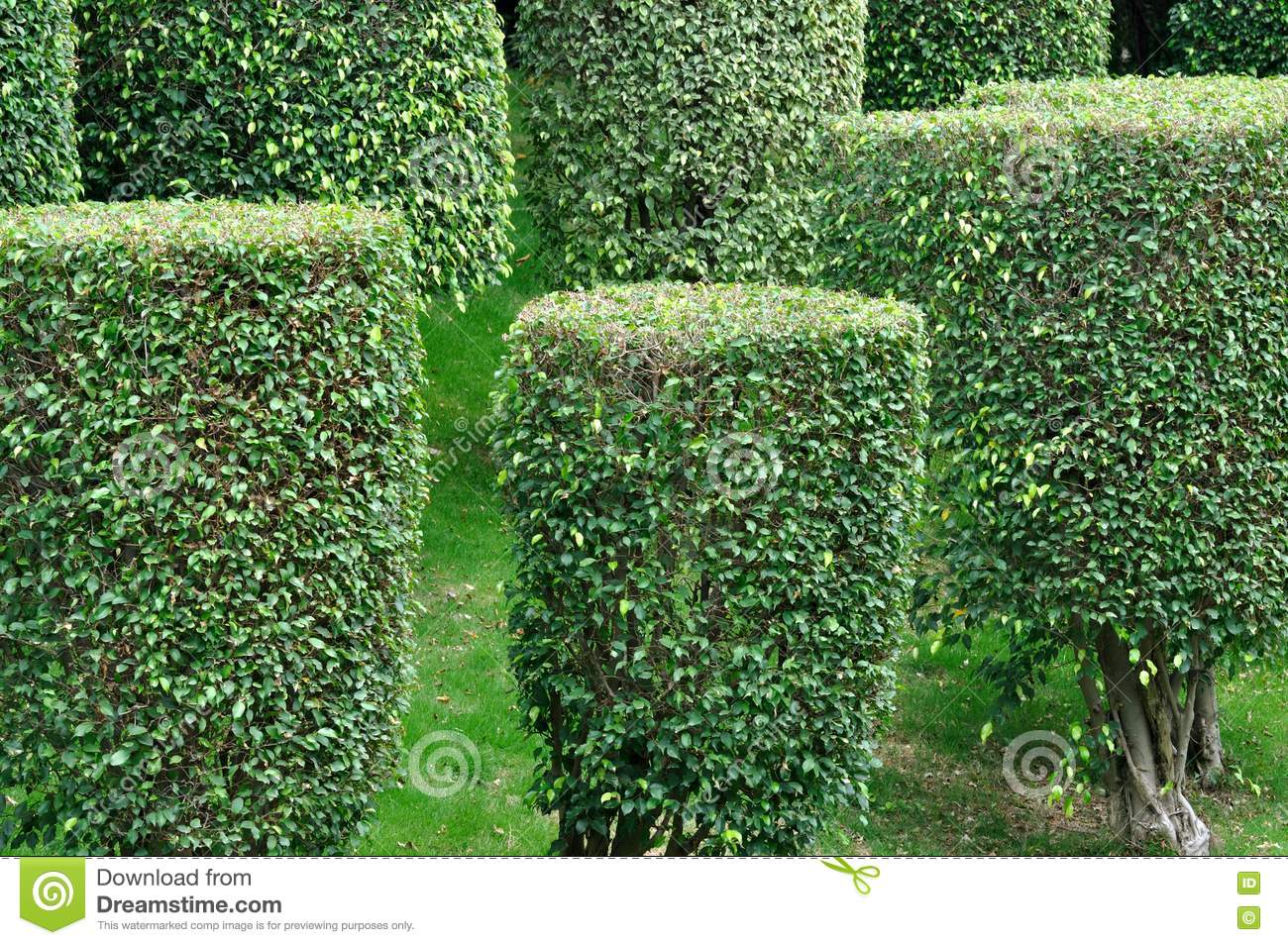 Garden Design Garden Design with Bushes PNG images free download