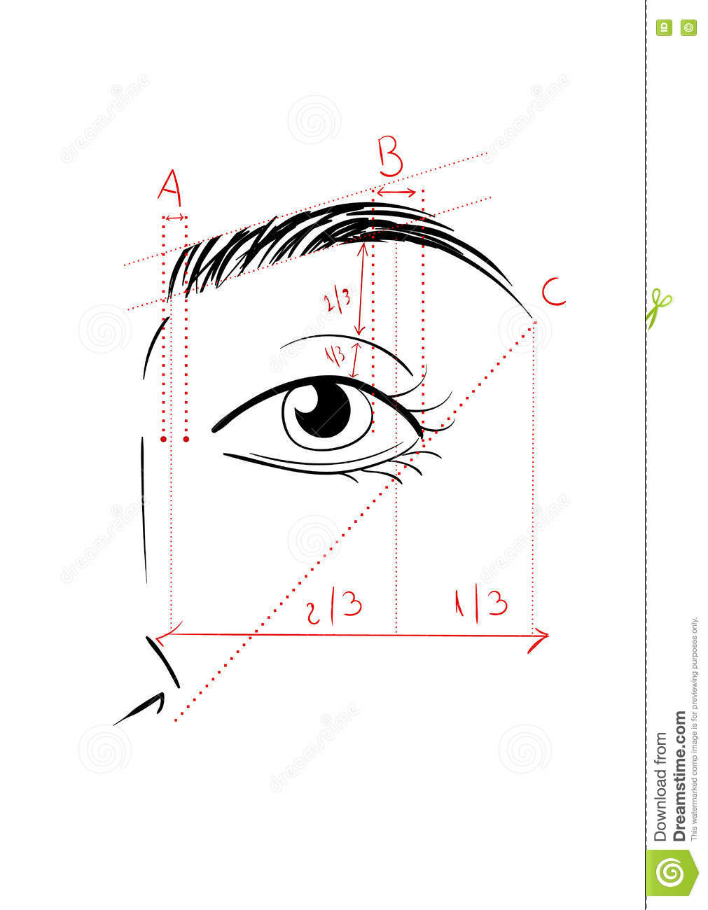 Shaping The Eyebrows Stock Vector - Image: 73833911
