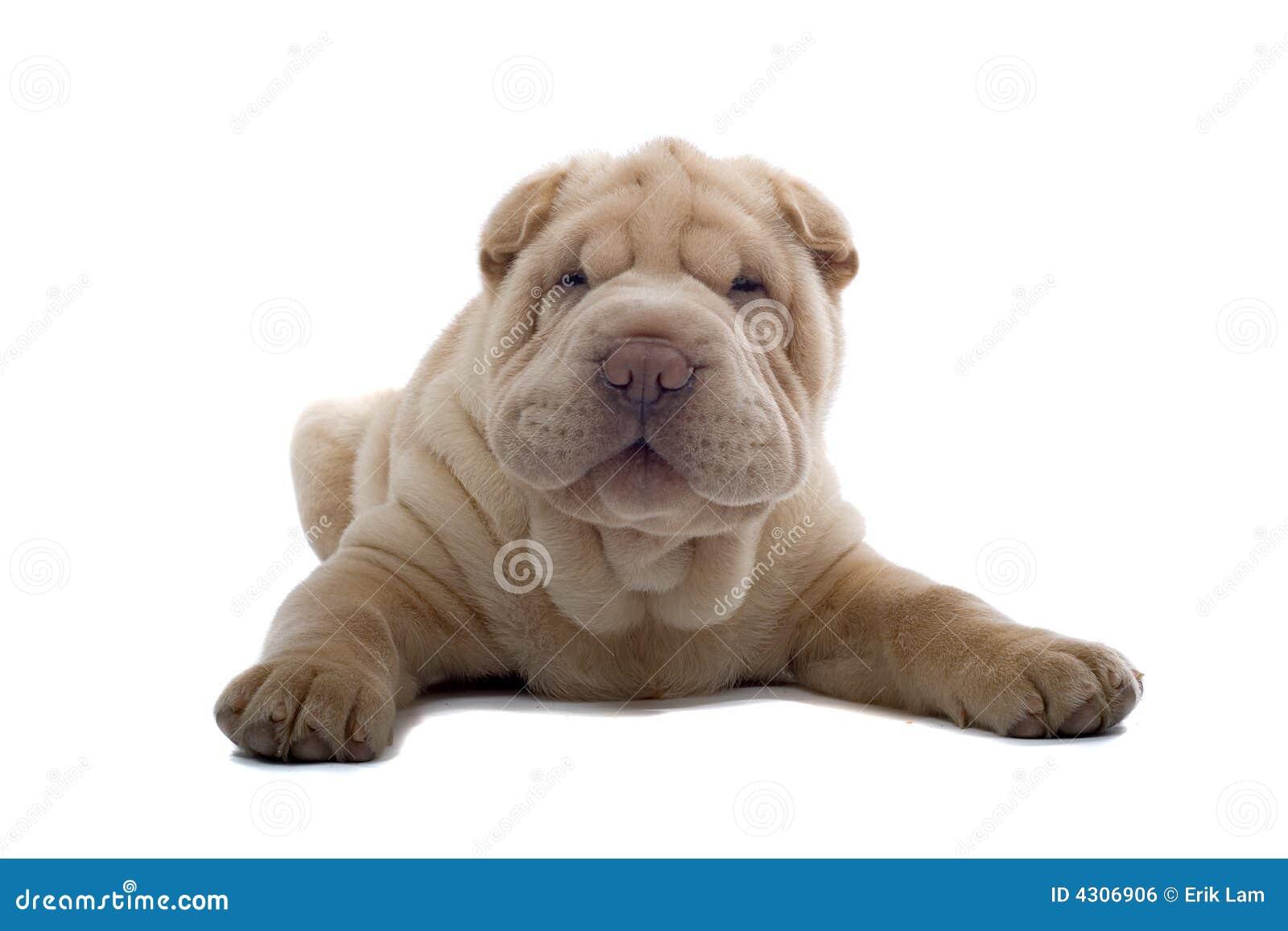 Shar hundpeivalp