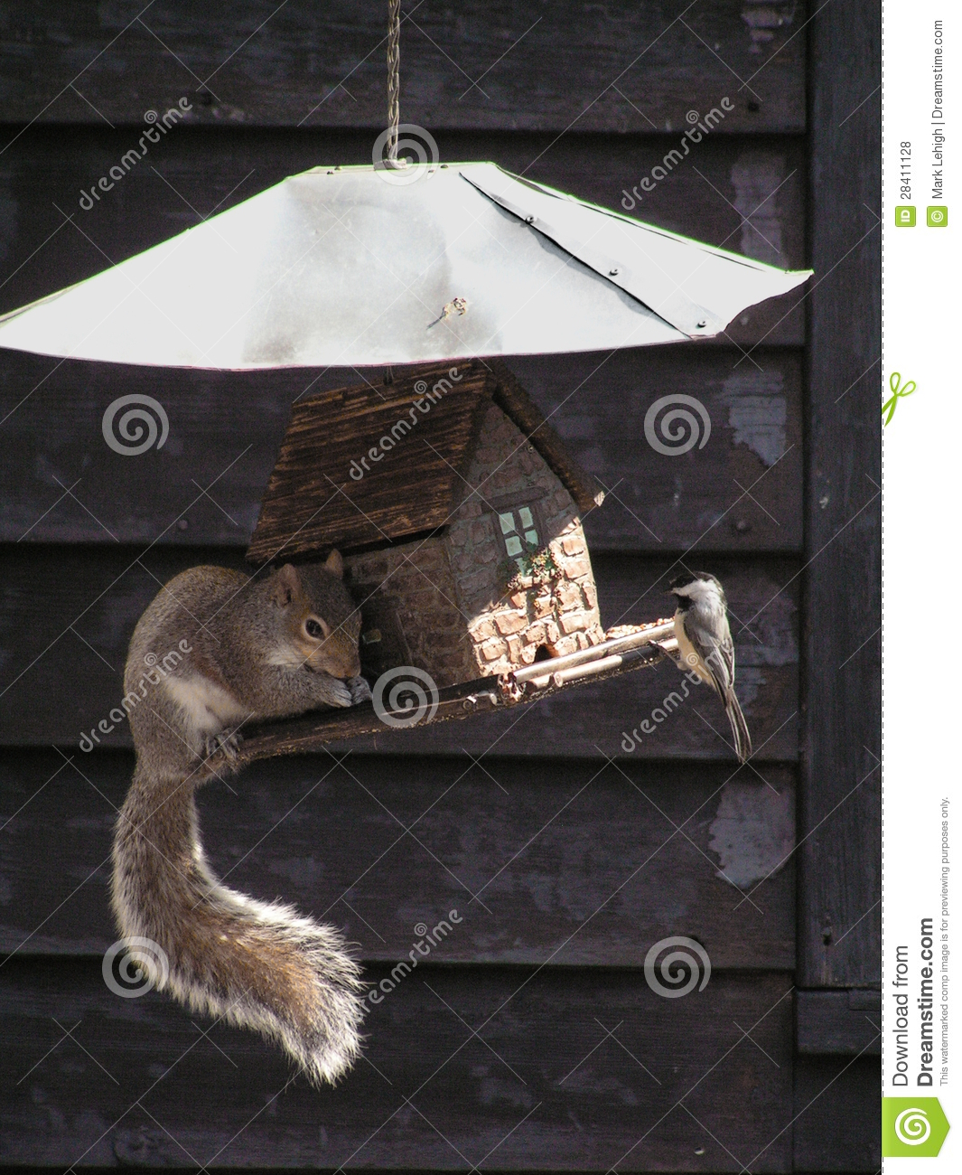Download Share stock photo. Image of eating, birdwatching, funny - 28411128