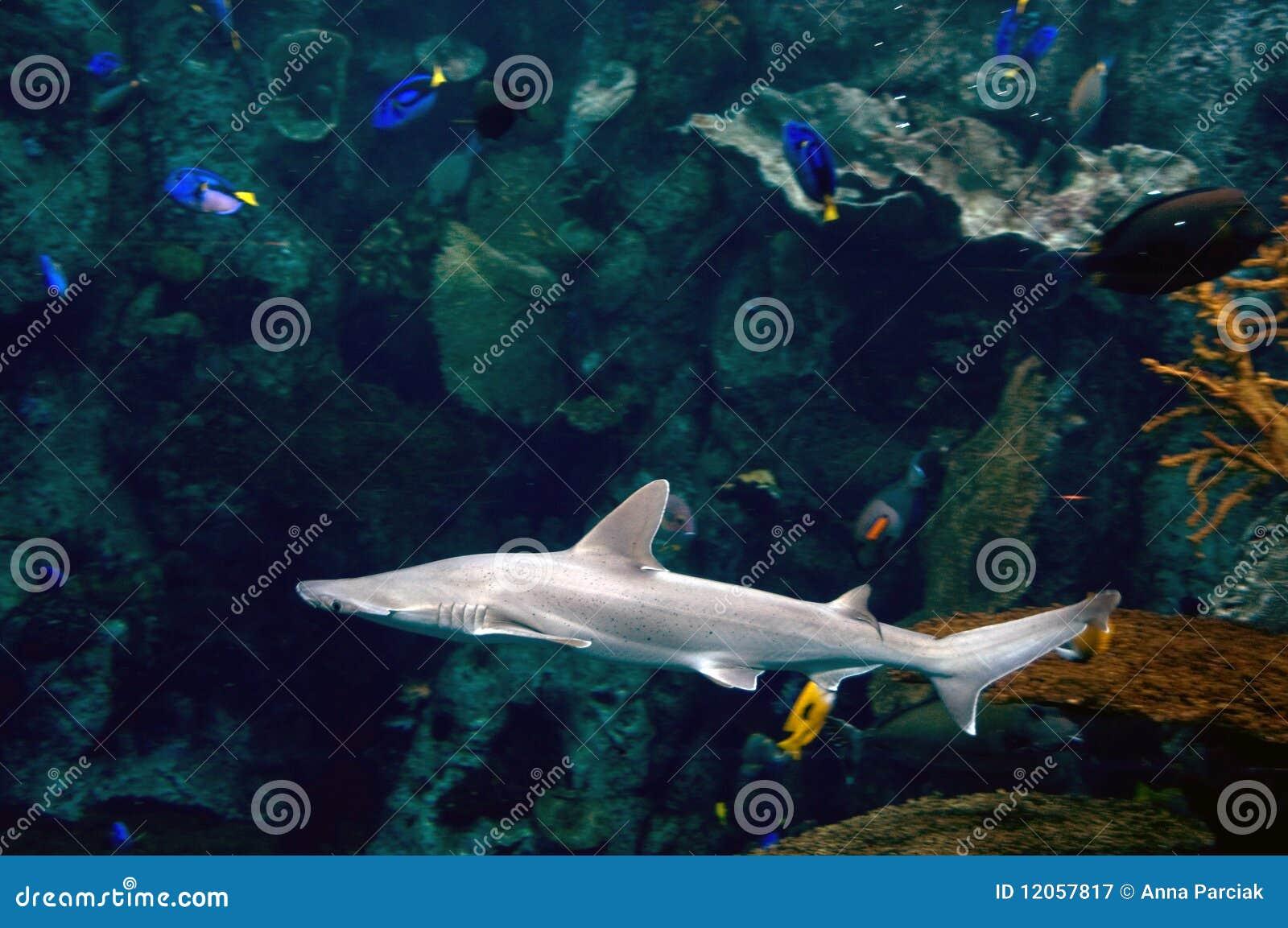 Shark Royalty Free Stock Photography Image 12057817