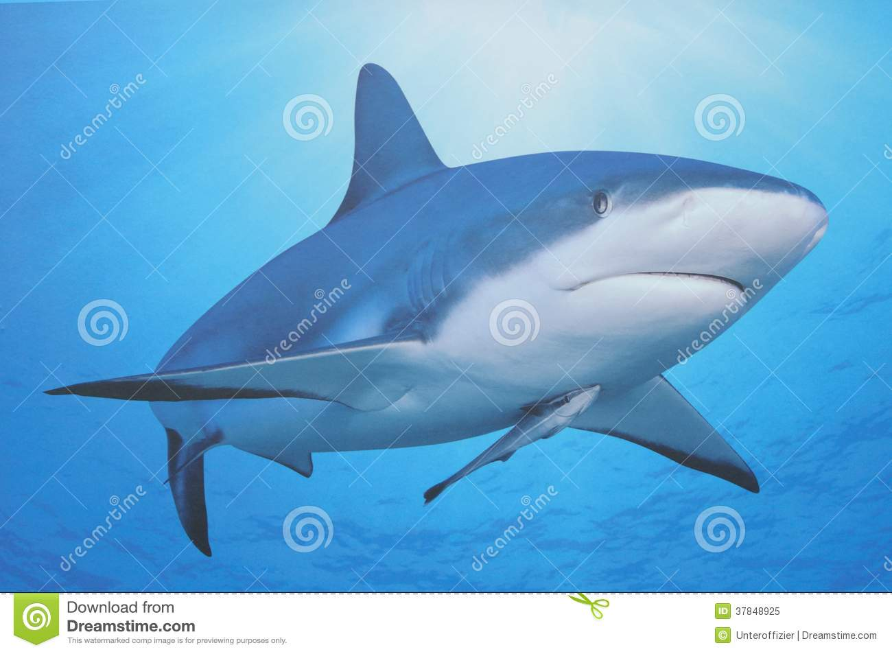 Shark and its baby