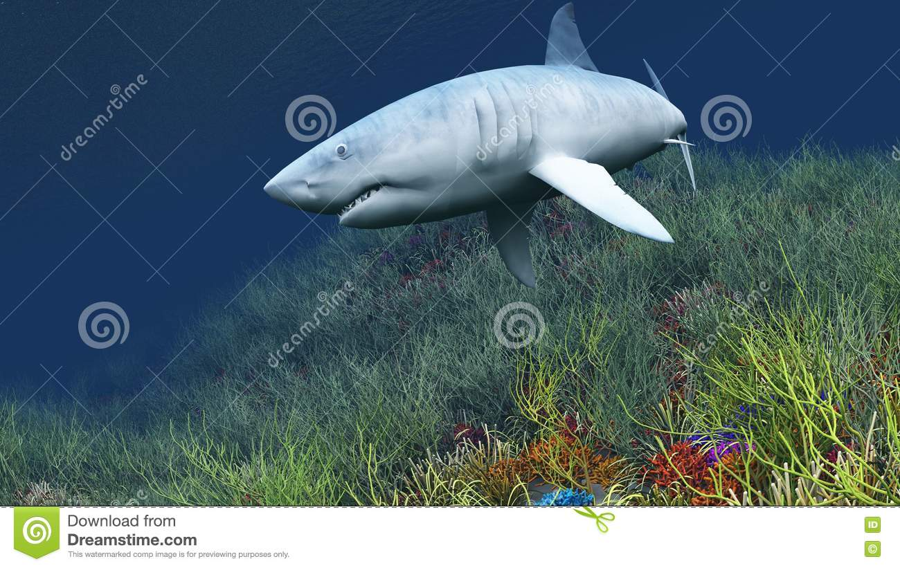 Shark Picture. Image  8559824 a9e2a48d3ae
