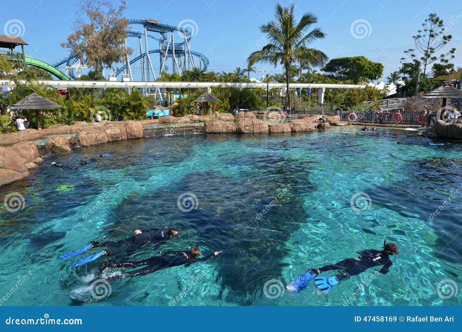 Shark Bay In Sea World Gold Coast Queensland Australia ... Pacific Ocean Underwater Animals