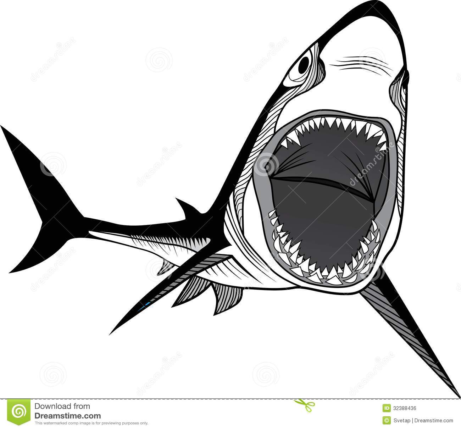 Shark Fish Head Stock Photo. Image Of Ocean Monster - 32388436