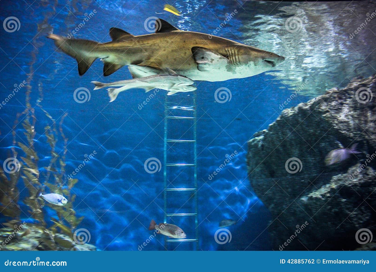 Shark with fish underwater in natural aquarium for Shark fish for aquarium