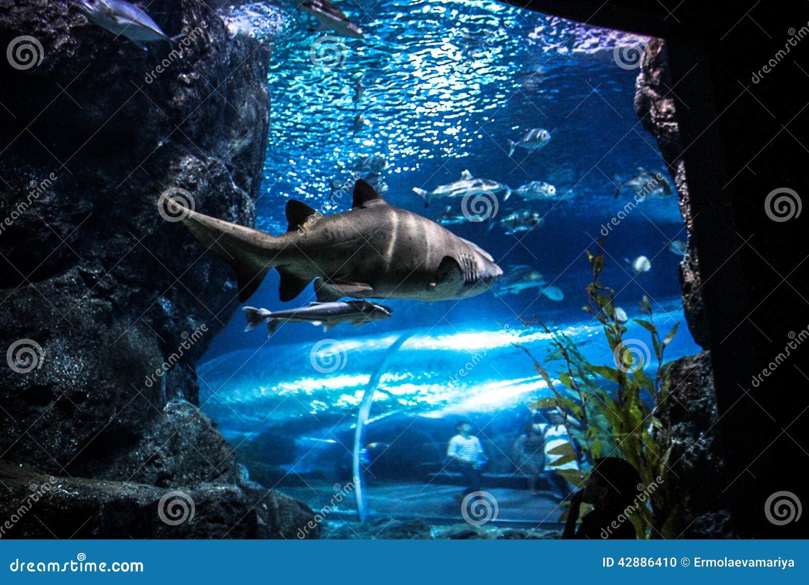Fish for natural aquarium - Shark With Fish Underwater In Natural Aquarium Stock Photo