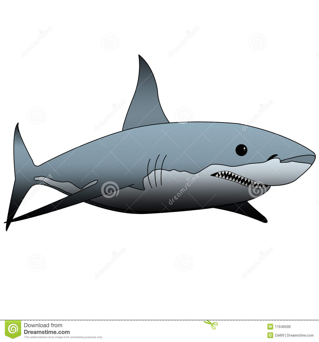 Shark illustration stock illustration. Illustration of grey - 11646590 for Great White Shark Diagram  173lyp