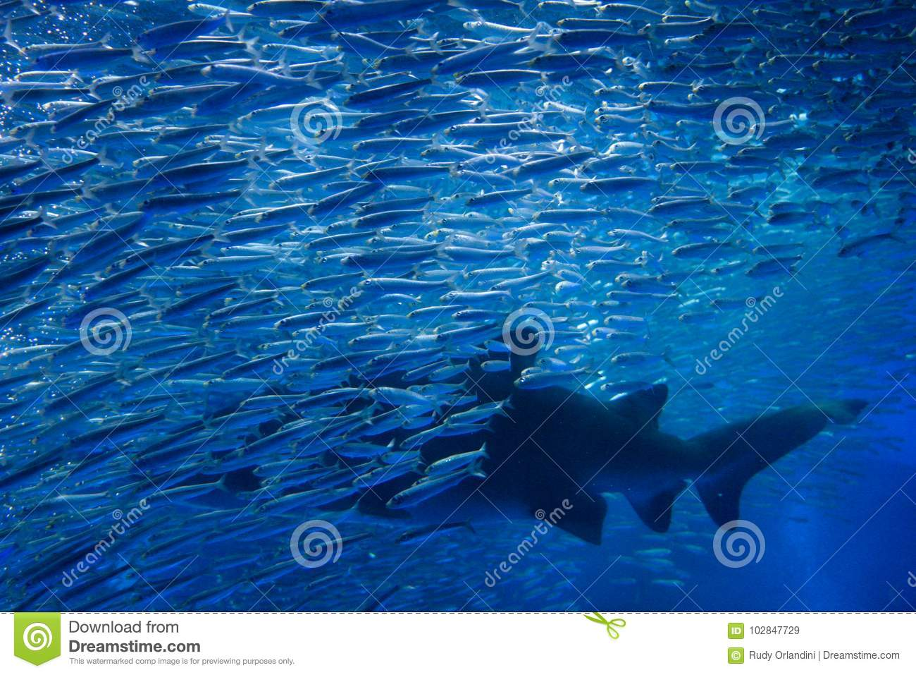 Shark with many fishes in aquarium