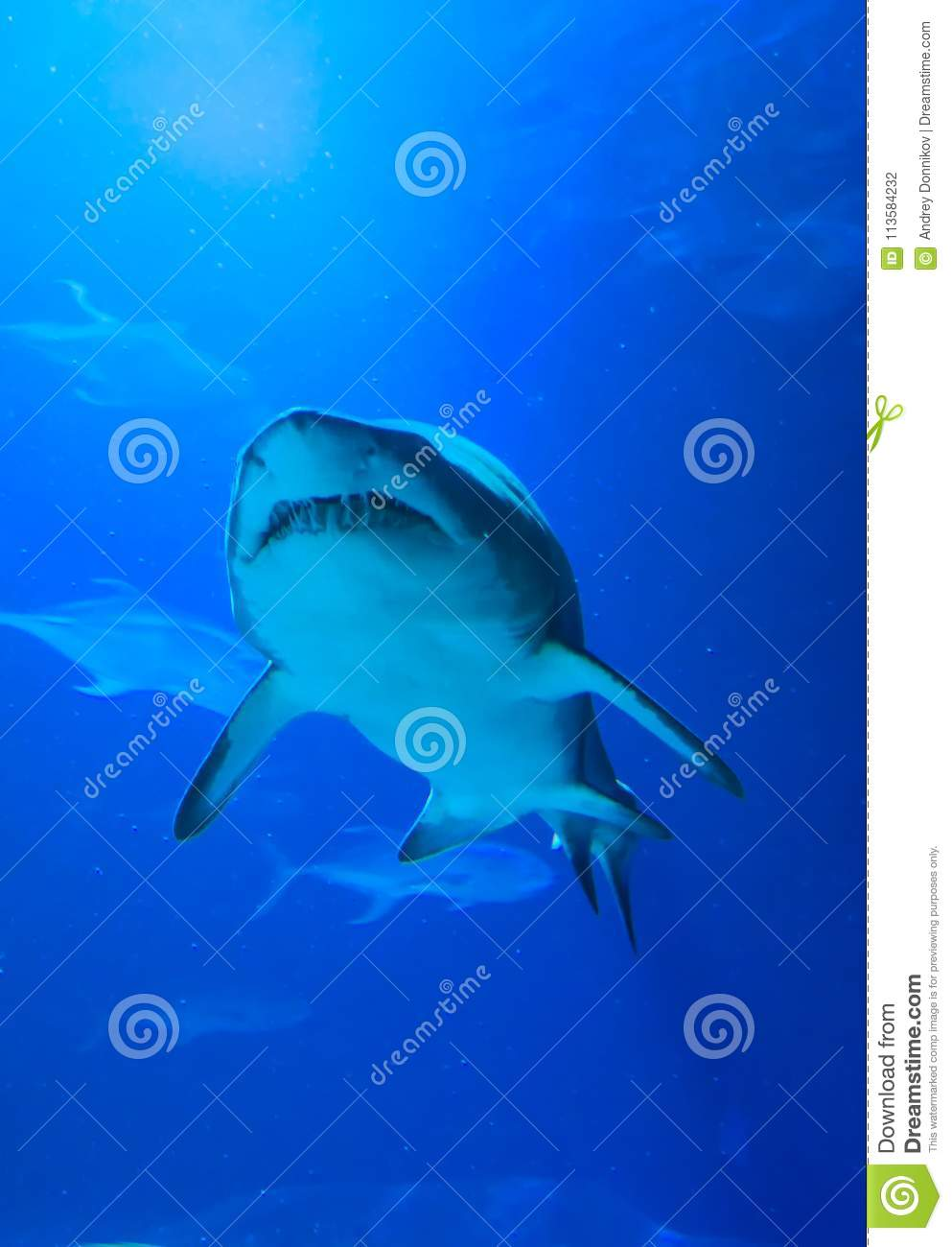 Shark swimming on a blue background