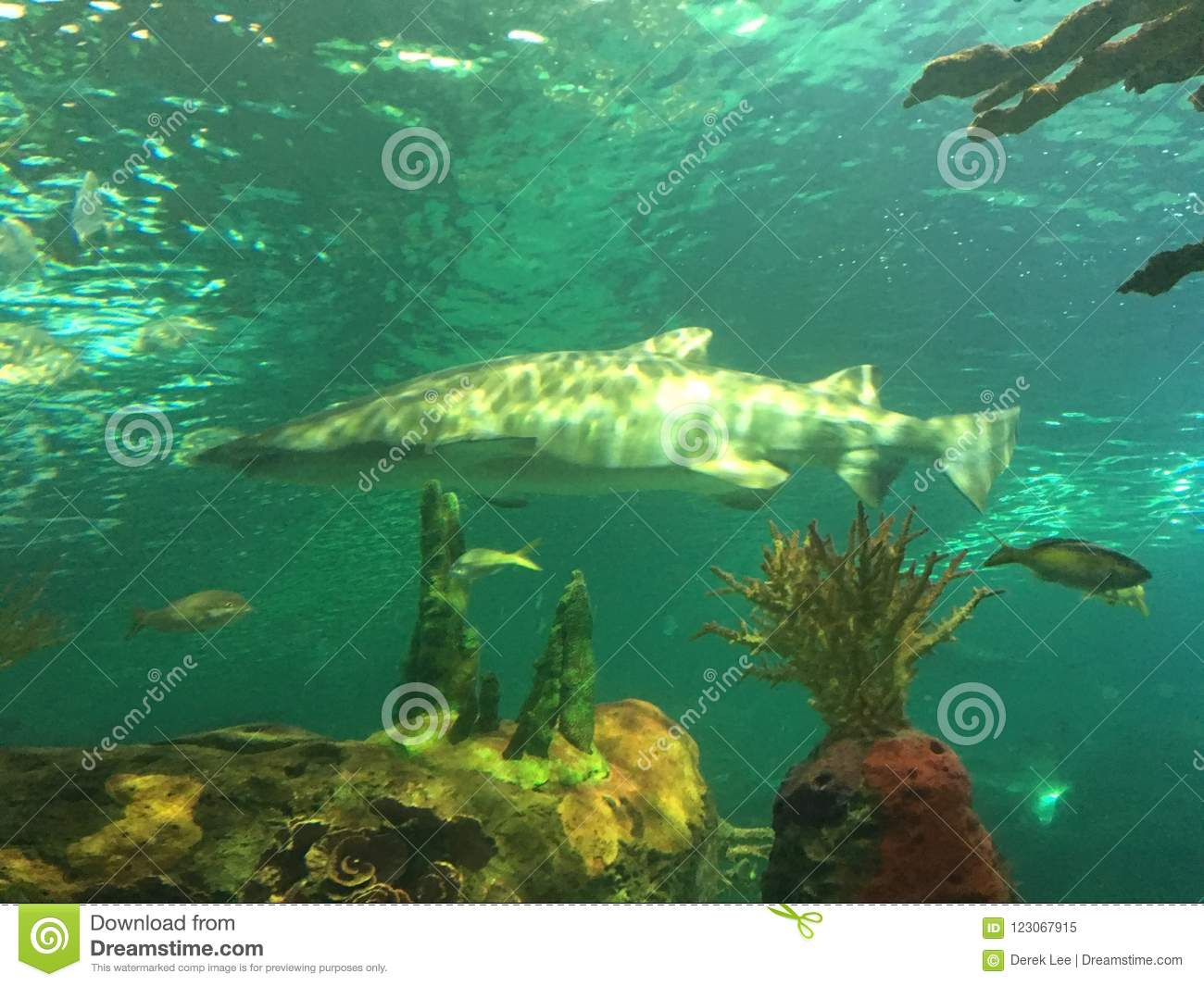 Shark swimming in a tank with other aquatic animals