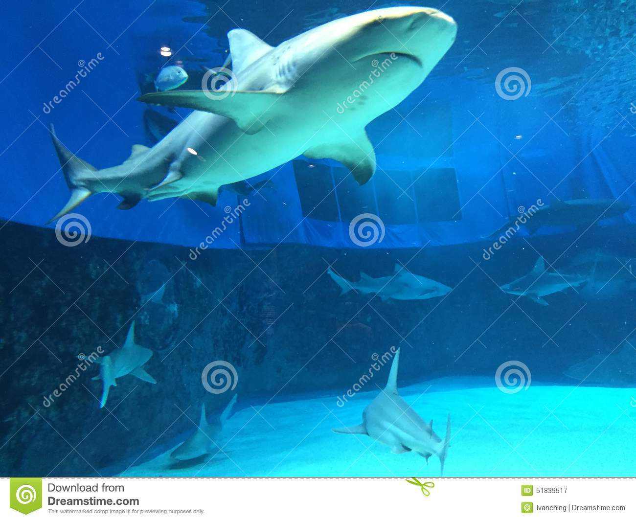 Sharks And Sharks Editorial Photography Image 51839517