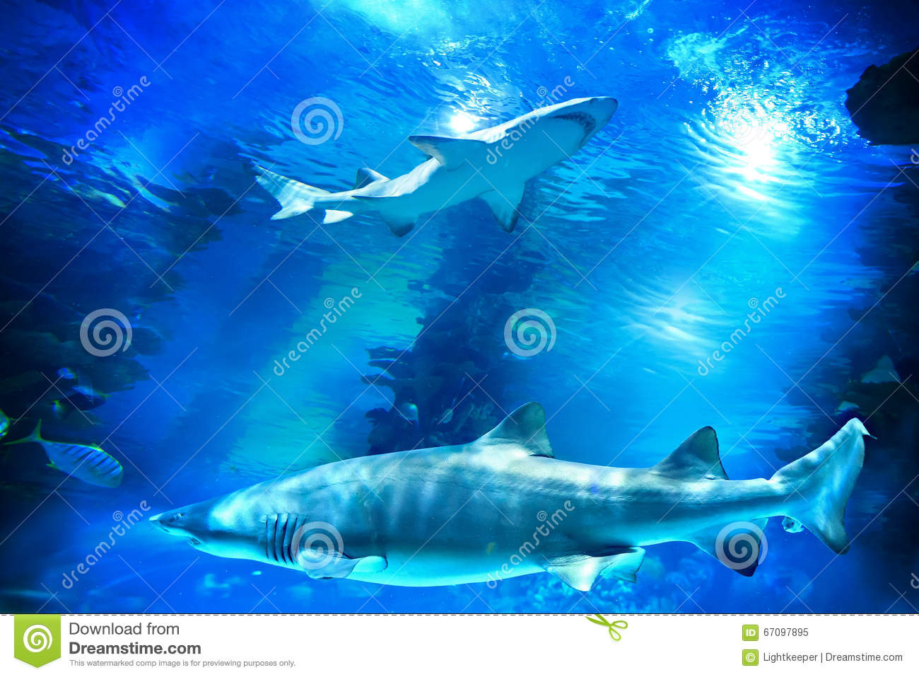 Sharks and small fish in aquarium stock photo image for Small sharks for fish tanks
