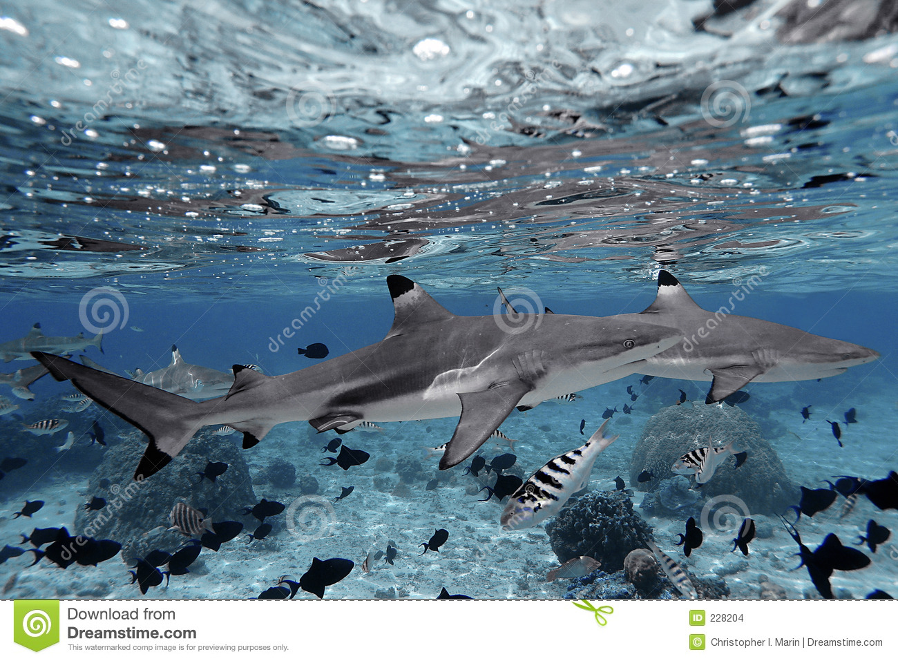 Sharks swimming in crystal clear water