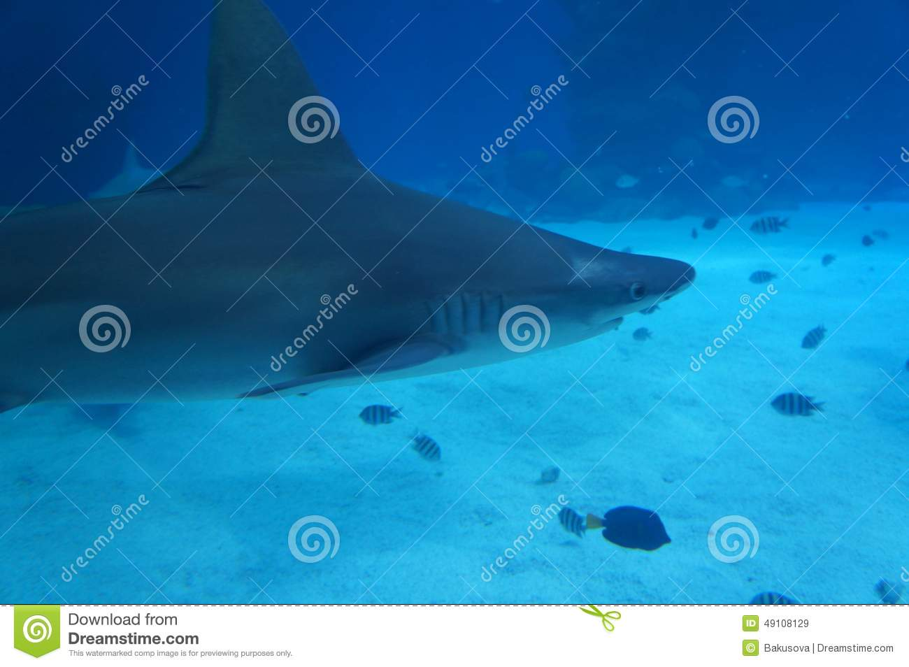Sharks in the tank stock photo image 49108129 for Swimming pool fish